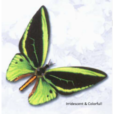 Robotic Insect: Life-like Moving Butterfly - Irridescent Birdwing